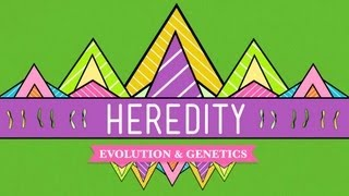 Download Heredity: Crash Course Biology #9 Video