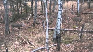 Download 11 point buck taken with bow Self filmed Video