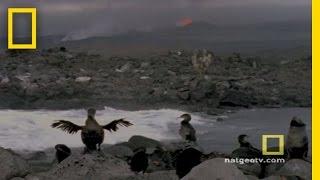 Download Galapagos | Exploring Oceans Video