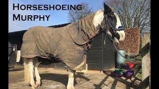 Download Horseshoeing Murphy Video