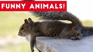 Download Funniest Pets of the Week Compilation August 2017 | Funny Pet Videos Video