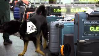 Download X-Ray Mega Airport: Drug Sniffing Dog Video