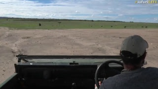 Download safariLIVE - Sunrise Safari - Nov. 03, 2017 Video