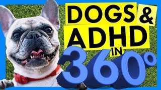 Download 5 Ways Dogs Help ADHD Brains - in 360 Degrees!!! Video