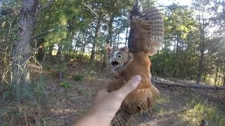 Download Rescuing a screech owl tangled in fishing line, New Jersey - 09/06/2015 Video
