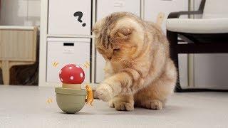 Download 고양이 운동 시키는 장난감을 본 귀여운 반응 Video