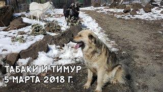 Download ТАБАКИ И ТИМУР 5 МАРТА 2018 Г. Video