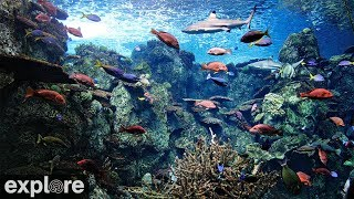 Download Tropical Reef Camera powered by EXPLORE.org Video