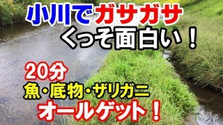 Download 小川で魚取り!【網でガサガサ!20分で魚とザリガニ】 Video