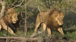 Download SouthAfricaDjChiAMsafariLIVE 2 Dec 2017 Birmingham males Video