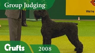Download Giant Schnauzer wins the Working Group Judging at Crufts 2008   Crufts Dog Show Video