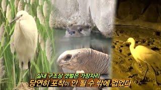 Download 20131006 TV동물농장 #2(5) Video