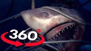 Download VR Videos 360 SHARK VR - OMG Will you survive? Virtual Reality 360 Video POV 180° Video