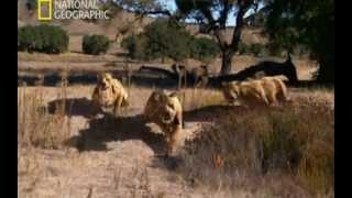 Download Depredadores prehistóricos (Mandíbulas mortales) Video