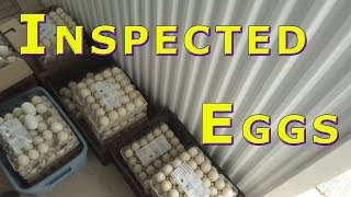 Download Food Bank Donation Officially Inspected Graded Eggs Feb 22, 2018 Video