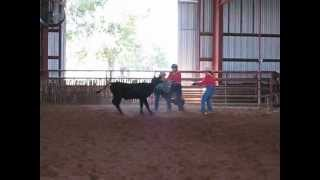 Download Extreme Cowgirl Ranch Rodeo 9/22/2012 Yellow Team Calf Riding! Take 1 Video