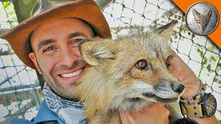 Download Friending a Fox! Video