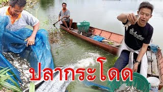 Download ดักปลาขั้นเทพ ใช้น้ำล่อปลามาติดกับ แมตนี้16 กิโลกรัม Video