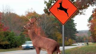 Download Please Move The Deer Crossing Video