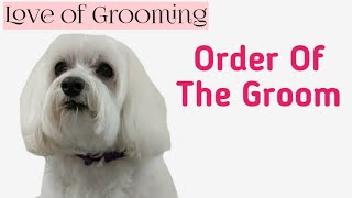 Download Step by step Dog Grooming - Order of the Groom on a Well Maintained Dog Video