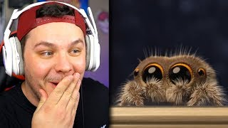 Download Lucas The Spider *ADORABLE* - Reaction Video