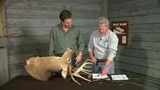 Download How to score a deer. Video