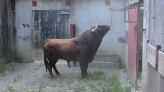 Download Débarquement Corrida Baltasar Iban Video
