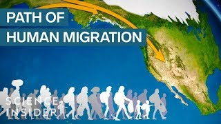 Download Map Shows How Humans Migrated Across The Globe Video