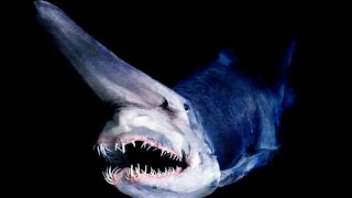 Download Top 10 most amazing deep ocean creatures Video