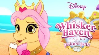 Download Whisker Haven Tales with the Palace Pets | Season 3: Full Episodes 1-8 | Disney Video