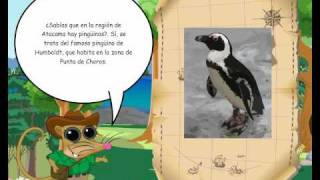 Download Mi Geografía - Flora y fauna de Chile Video