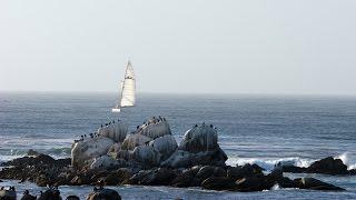 Download Live Monterey Bay Cam in HD - Monterey Bay Aquarium Video