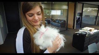 Download Bunz the Bunny inspires Nissan designers Video