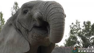Download ぞうさんのもぐもぐアイス 東武動物公園 Video