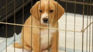 Download How to House Train a Puppy | Dog Training Video