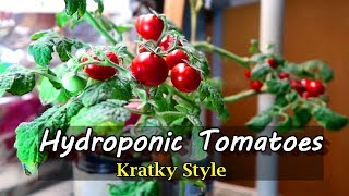 Download Growing Hydroponic Tomatoes Indoors Using the Kratky Method Video