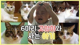 Download 아이와 함께 사는 여섯마리 고양이 Video