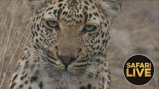 Download safariLIVE - Sunrise Safari - August 12, 2018 Video