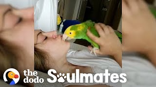 Download Loyal Parrot Is His Mom's Lifetime Companion | The Dodo Soulmates Video
