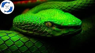 Download 15 Most Venomous Animals on Earth Video