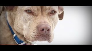 Download A Look Back: 100 Dogs Rescued from Freezing Blizzard by ASPCA Video