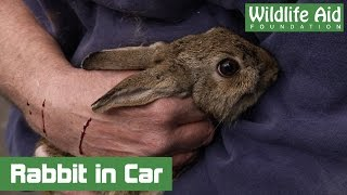 Download Scared Bunny Rabbit Trapped in Car Engine for Hours Video