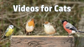 Download Video for Cats - My Garden Birds in December NEW ✔️ Video