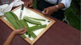 Download How to make Aloe Vera gel? Video