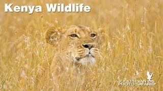 Download Kenya Wildlife Photo Safari—Masai Mara, Samburu and Lake Nakuru Video
