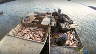 Download Carp Madness - Commercial Fishing Tournament Video