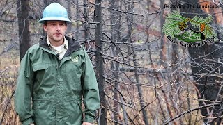 Download Pioneer Fire Reforestation on the Boise National Forest Video