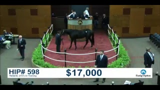 Download The Fasig-Tipton Midlantic 2YO's In Training Sale - Day 2 Video
