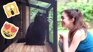 Download We built a patio for our cat… a CATIO! Video