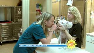 Download I Love My Job: Veterinarian Video